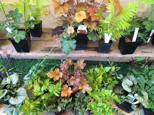 master gardener sale 6