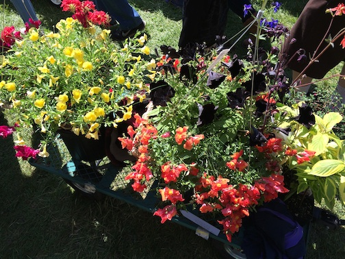 master gardeners sale 4