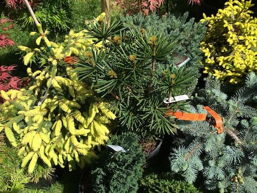 master gardeners sale 5