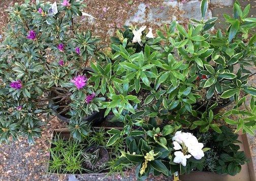 master gardeners plant sale 7